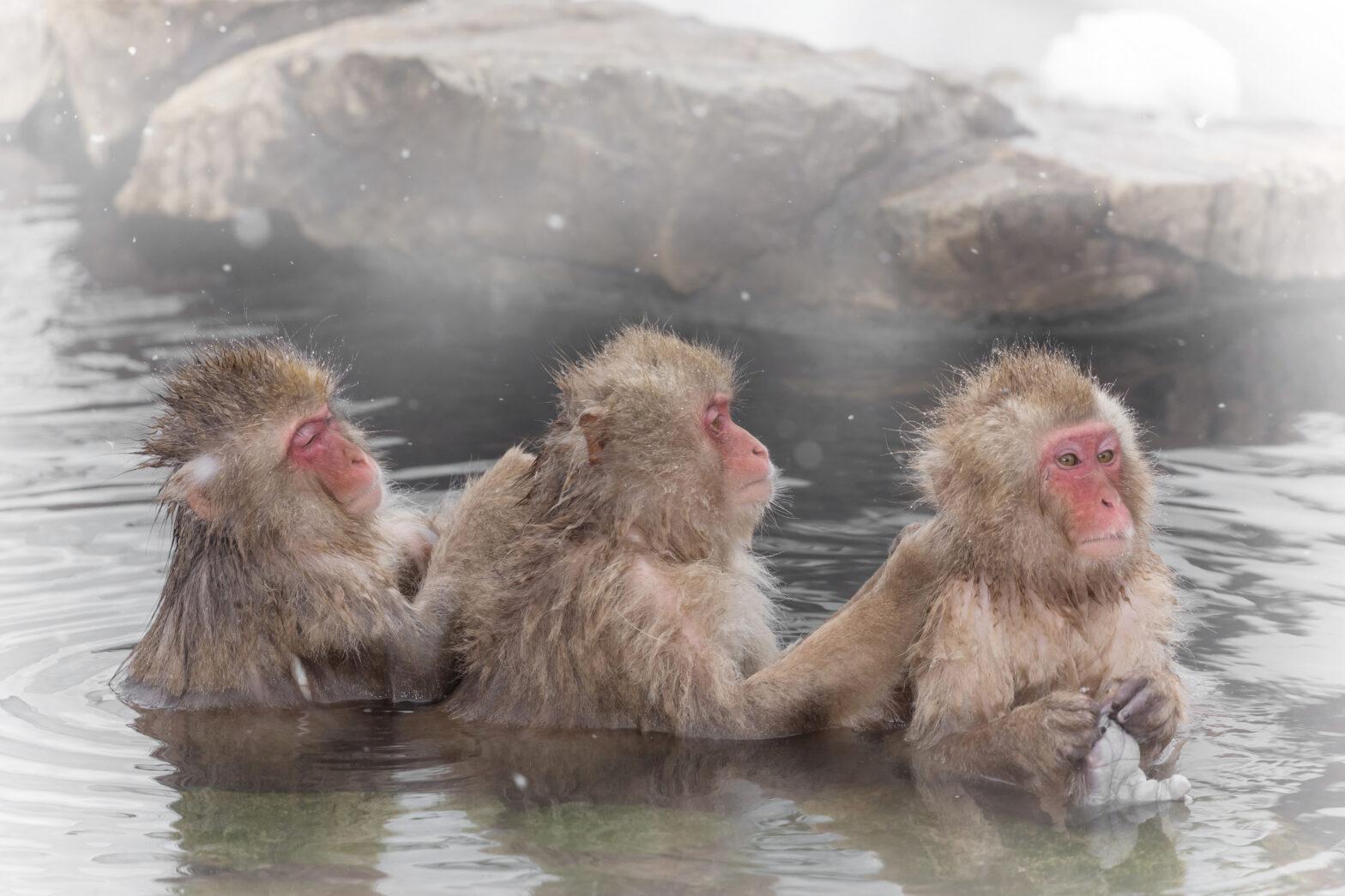 【関東甲信越】混浴温泉・露天風呂 全81施設一覧&おすすめランキングTOP10|2020年最新情報