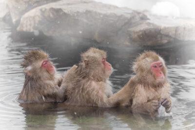 【関東甲信越】混浴温泉 全81施設&おすすめランキングTOP10|2020年最新情報
