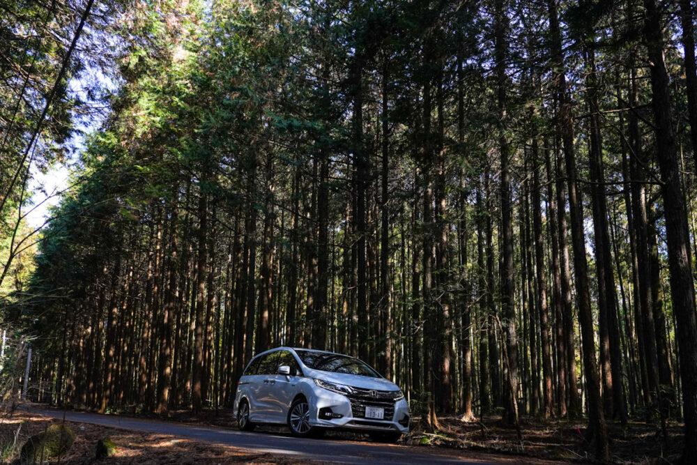 杉林の中のホンダ オデッセイ ハイブリッド アブソリュート EX HondaSENSING