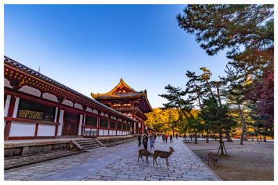【無料も】奈良公園周辺の料金が安いおすすめ駐車場17選|鹿には要注意?