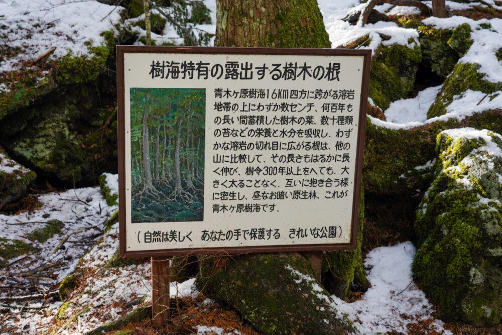 富岳風穴の入り口にある解説看板。