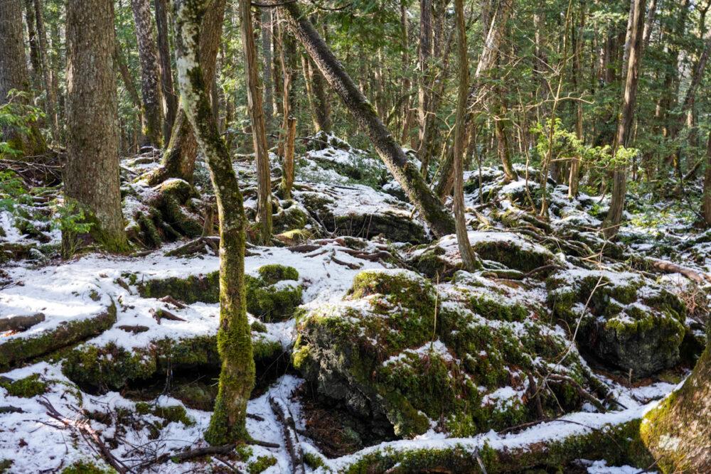 富岳風穴の外側のある森の木々