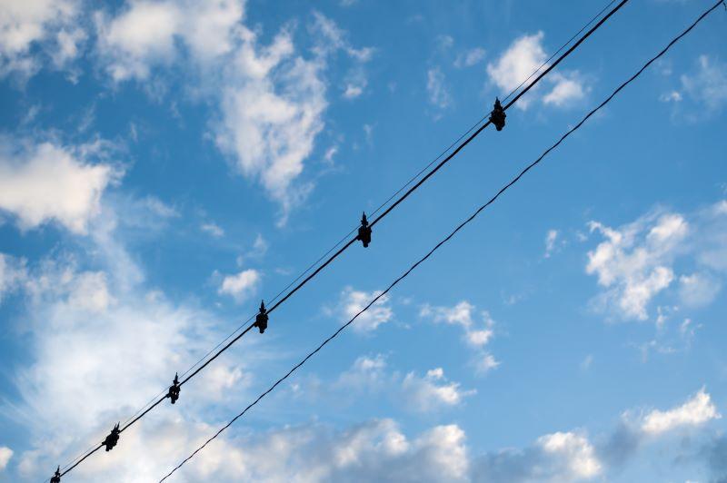 鳥よけ電線