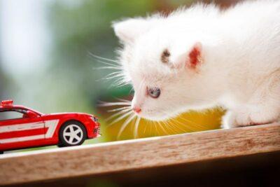 2月22日は猫の日!知らなきゃマズイ、自動車の「猫バンバン」とは