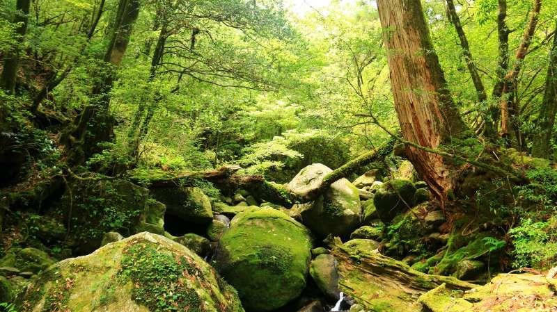 ジブリの森のイメージ