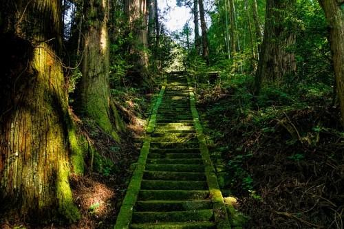 苔 階段 石