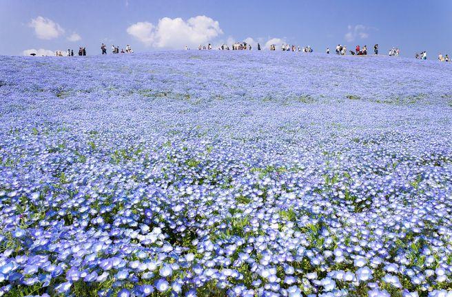 春の国営ひたち海浜公園