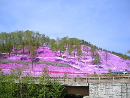 東藻琴の芝桜公園