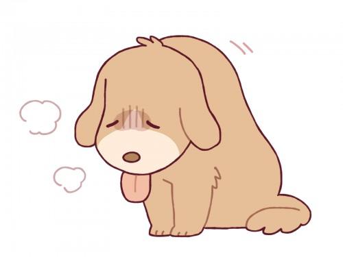 具合の悪い犬