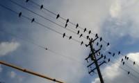 車についた鳥のフンが取れない時の落とし方|未然に防ぐ予防・対策とは?