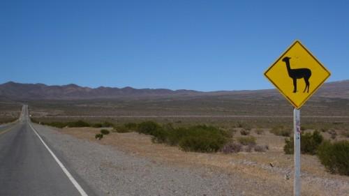 roadkillsign