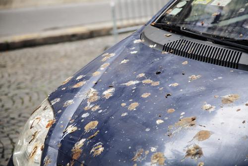 鳥のフンがボンネットに落ちた車