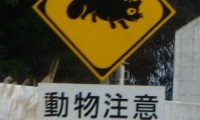 【ロードキル事故対処法】車で動物をひいてしまった時の対処法全ステップ!