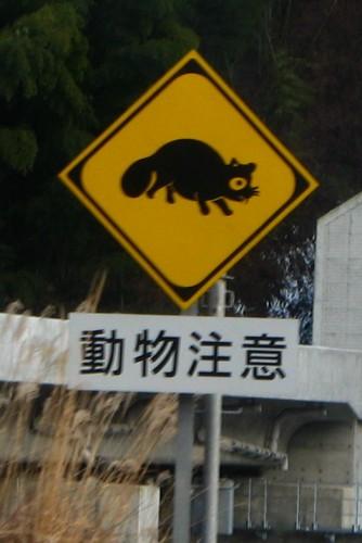 野生の動物と交通事故