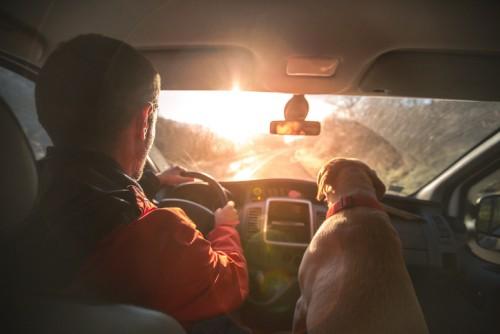 ドライブ 犬 ペット