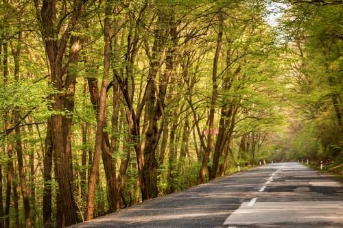 林道 田舎道 風景