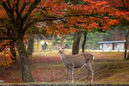 奈良 公園 周辺