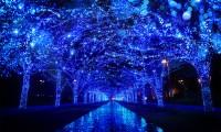 【青の洞窟 イルミネーション 2017】東京以外の場所でも開催!開催期間と時間など