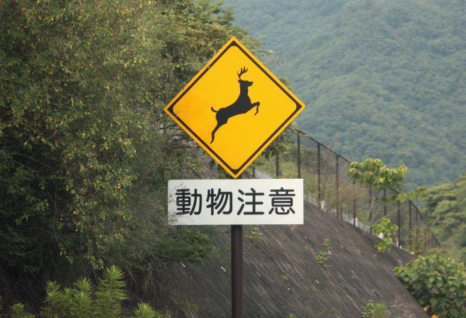 標識 動物注意