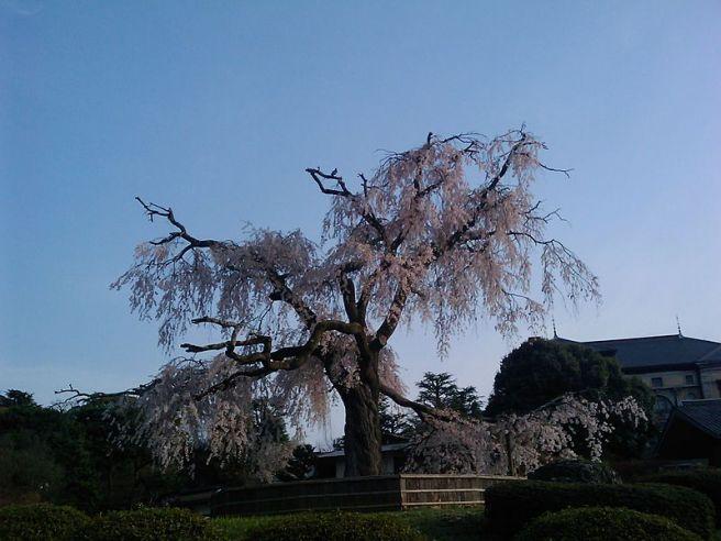 円山公園 京都府