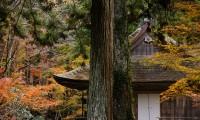 【三千院 紅葉・ドライブコース 総合情報】ゆばがたっぷりのった京風うどんでほっこり!