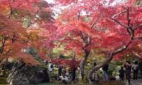 【宝厳院 紅葉狩り・ドライブコース 総合情報】美しい日本庭園を長めながら名物・湯豆腐を堪能