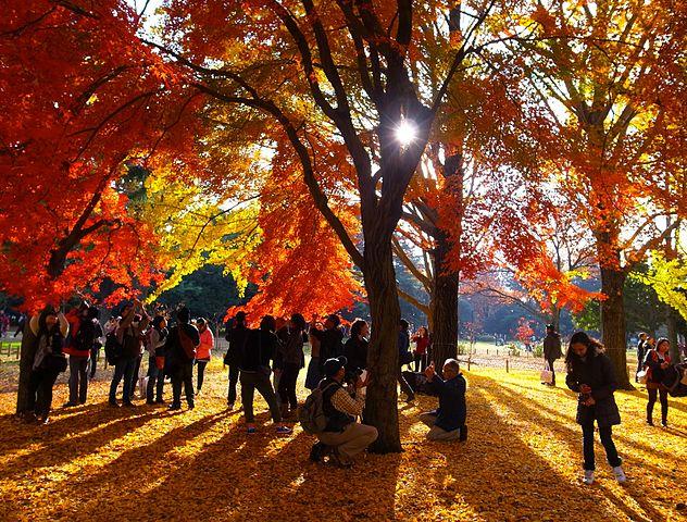 代々木公園 東京都