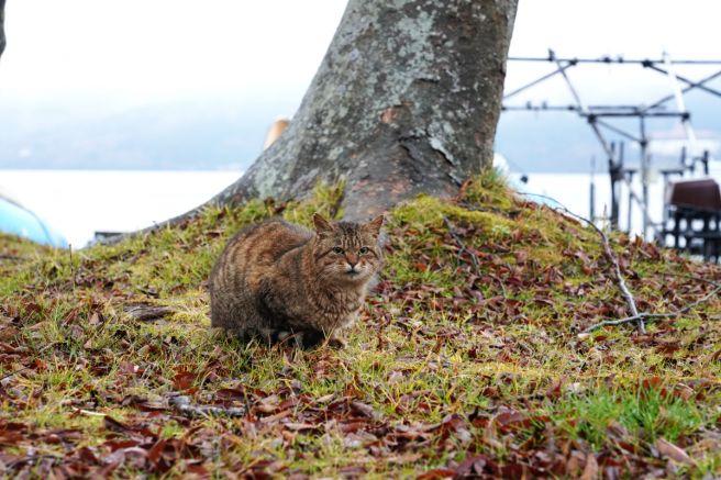 撮影を見守る猫