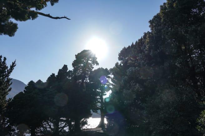 大瀬崎ビャクシン樹林