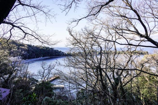 静岡県沼津市「大瀬崎」入り口から望むビャクシン樹林