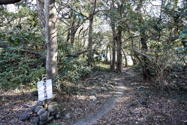 伊豆大瀬崎灯台へ向かう雑木林