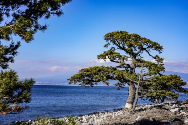 神池から雑木林を抜けた海岸で富士山を望む