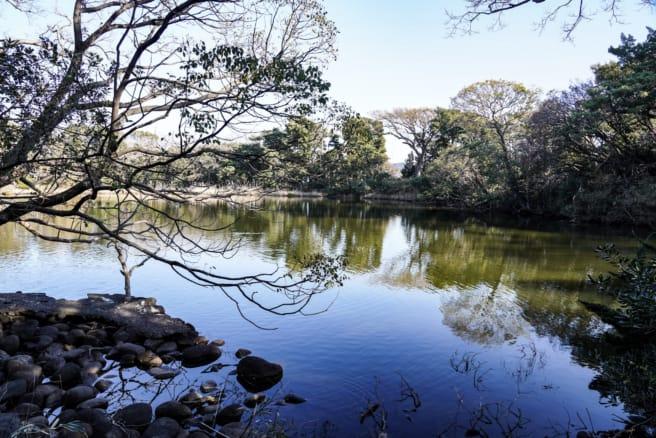 大瀬崎ビャクシン樹林「神池」