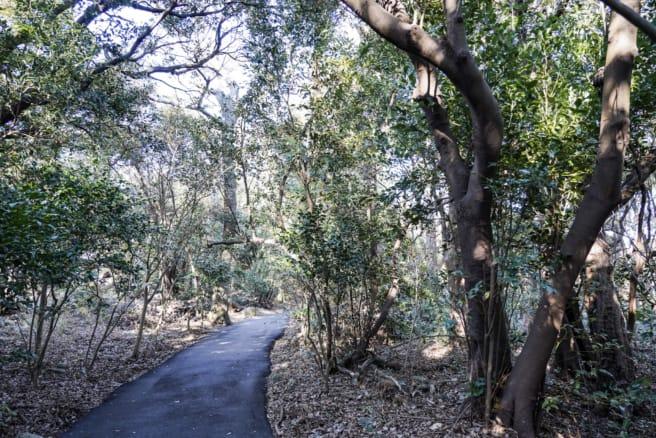 大瀬崎ビャクシン樹林へ向かう雑木林