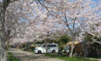 【イレブンオートキャンプパーク 総合情報】春にはお花見を満喫!周辺の観光スポットも紹介