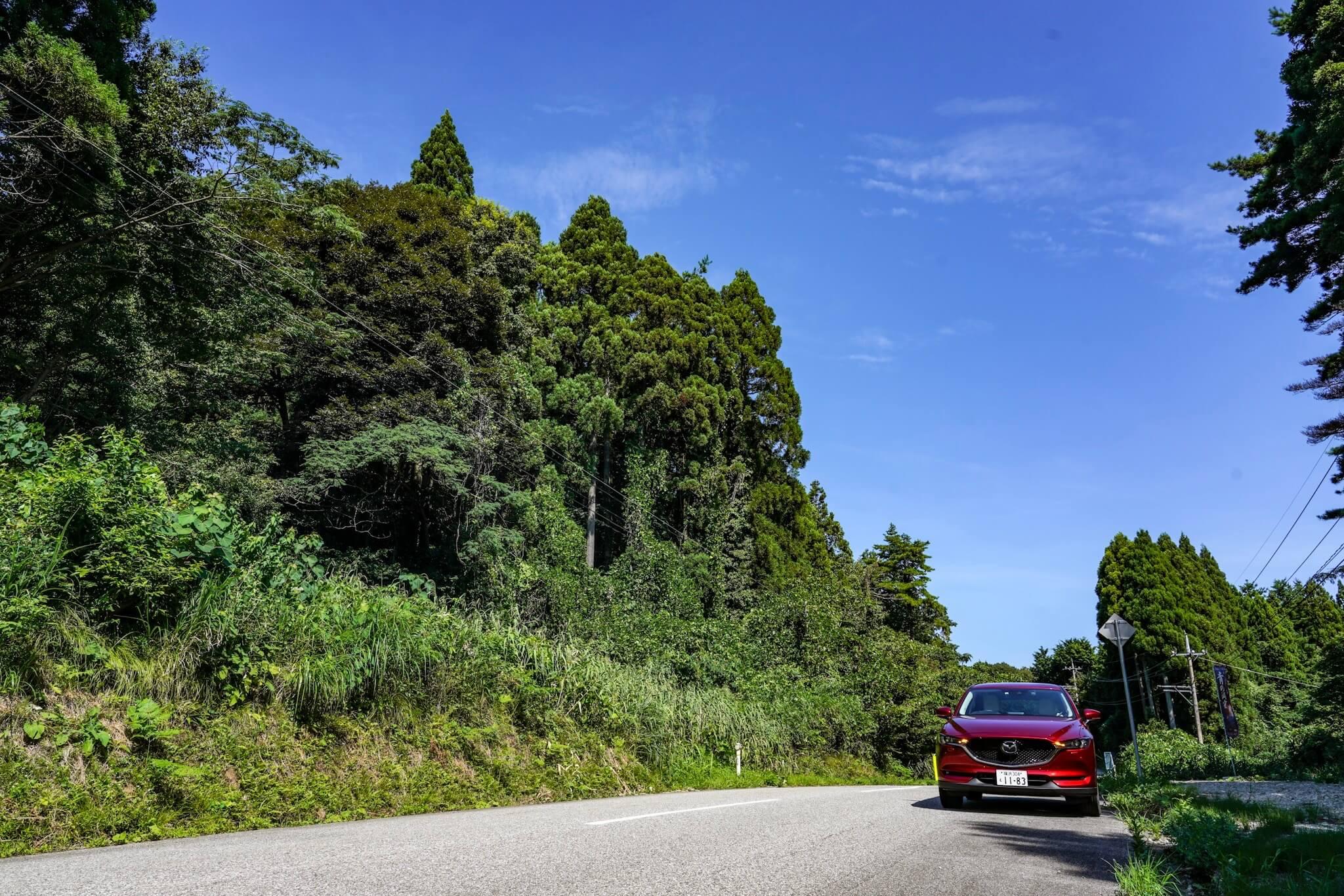 聖域の岬・青の洞窟 パワースポット「県道」